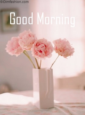 Hd Good morning wallpapers, sunrise images, coffee images, morning flowers, morning wishes,HD good morning